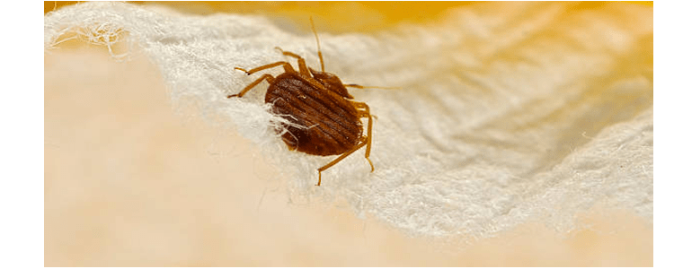 Expert Bed Bug Control Services