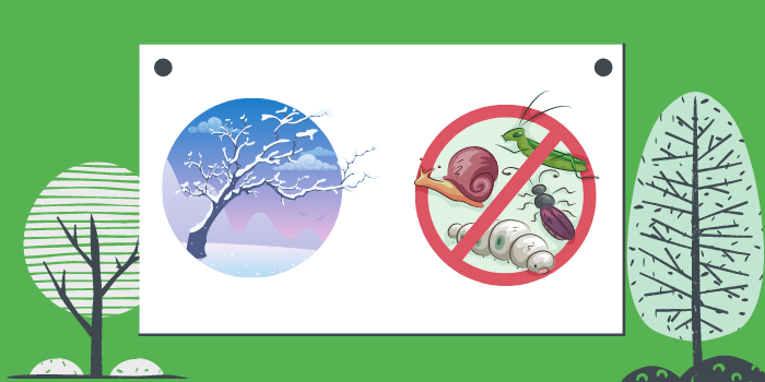 Most Common Pests That Invade Your Home In Winter How To Manage Them